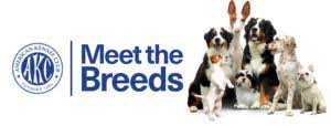 AKC - Meet the Breeds Graphic